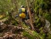 canyoning-rhodope-bulgaria-3